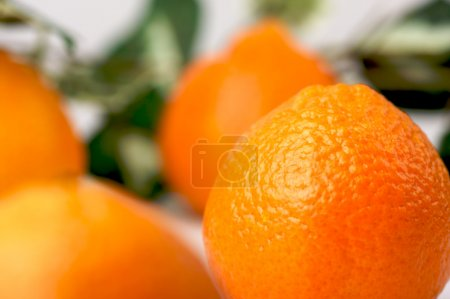 Photo for Clementine Oranges on a White Background - Royalty Free Image