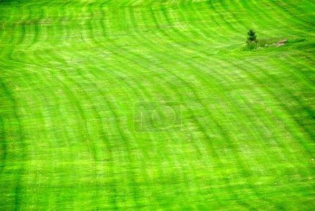 Lush Green Lawn
