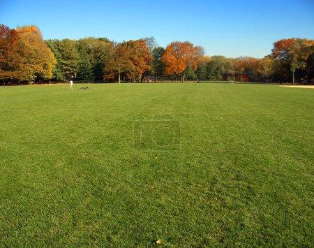 Photo pour Automne herbe et les arbres, grande pelouse, central park, manhattan, new york - image libre de droit