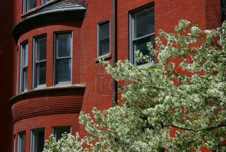 Blossoming tree and brick house