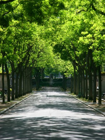 Graveyard alley