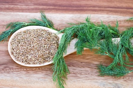 Photo for A wooden spoon filled with dill seed and wrapped with dill weed. - Royalty Free Image