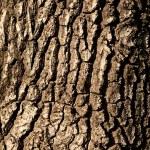 Tree bark texture (vertical)...