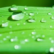 Droplets of dew on blade of grass...