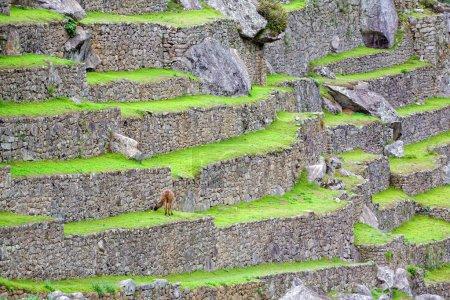 Terraces of Machu Picchu
