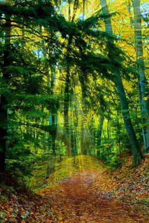 Photo pour Sentier pédestre dans la forêt du nord du Michigan - image libre de droit