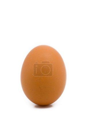 A single egg close up