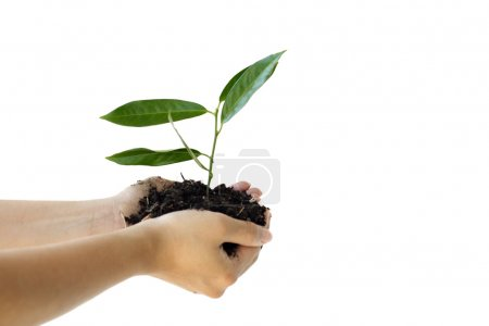 Photo for Hands holding a new plant - Royalty Free Image