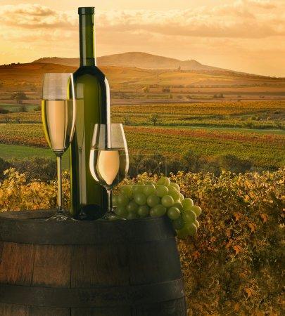 Foto de Bodegón con vino blanco, el racimo y barril sobre fondo en viñedo - Imagen libre de derechos