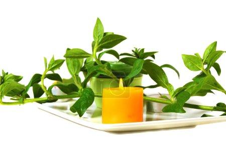 Photo pour Brûler une bougie jaune parfumée avec une brindille verte sur fond blanc - image libre de droit