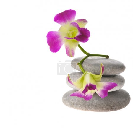 Purple orchid on stack of pebbles