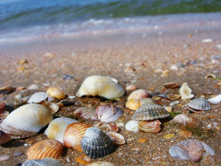 Photo for Shells on the beach - Royalty Free Image