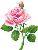 """Постер, картина, фотообои """"красивый розовый повысился"""""""