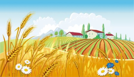 Illustration for Rural landscape with fields - Royalty Free Image