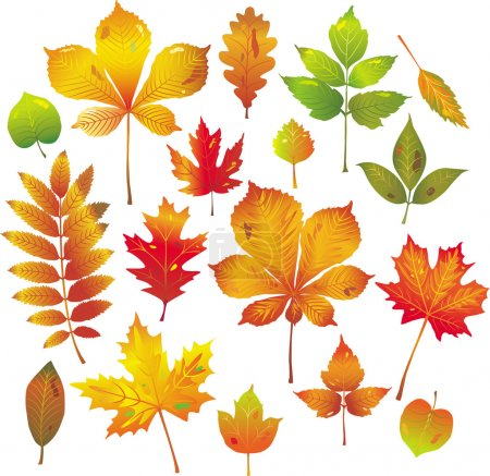 Illustration for Colorful autumn leaves collection - Royalty Free Image