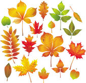 Colorful autumn leaves collection