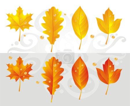 Fall Leaf Maple
