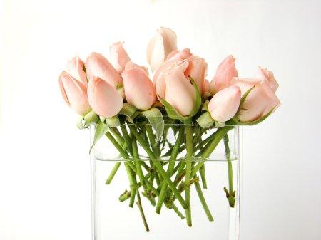 Little pink roses bouquet on vase