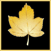 Gold leaf of a maple on a black background