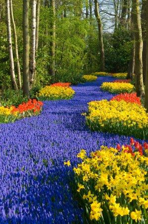 Photo pour Une ruelle de fleurs bleues jaunes et rouges - image libre de droit