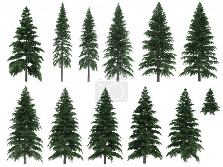 Fir trees isolated on white background...
