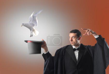 Photo pour Portrait d'un magicien jetant un sort sur son chapeau de cylindre et laissant une colombe en sortir - image libre de droit