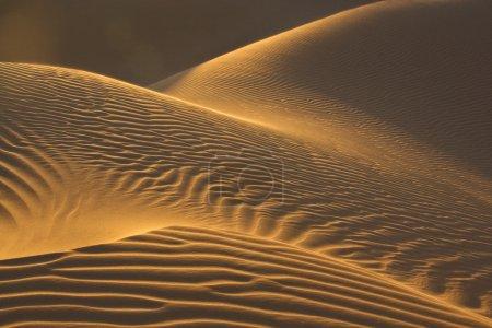 Sand dunes in evening sun