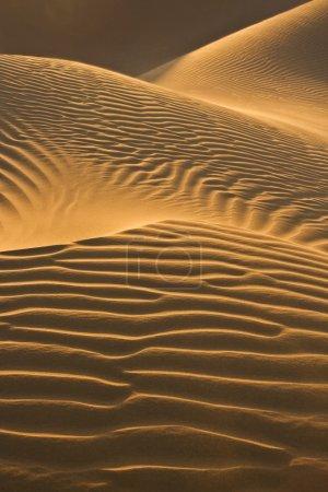Desert dunes in evening sun
