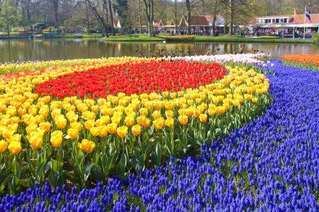 Photo for Keukenhof Gardens, Lisse, Netherlands - Royalty Free Image