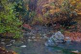 Autumn landscape with mountain river