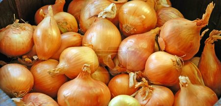 Orange Onions Background