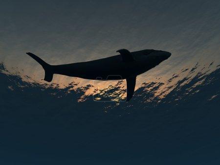 Photo pour Image d'une baleine qui nage sous l'eau . - image libre de droit
