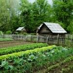 Vegetable Garden with gourd bird houses. Smoky Mou...