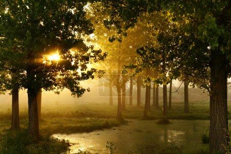 Foto de Mañana en madera cerca de un pantano - Imagen libre de derechos