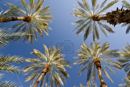 Luminous Date Palm Grove
