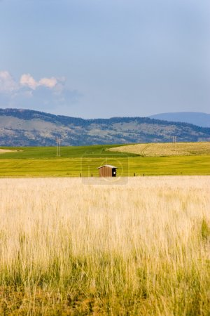 Field in Helena with a Shed