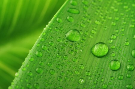 Green leaf and water drop