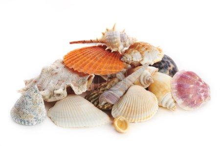 Colored sea cockleshells and starfish