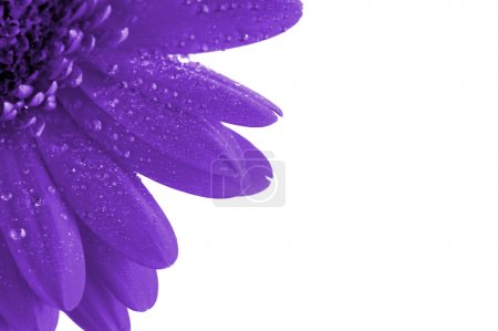 Photo for Fantasy purple flower close up - Royalty Free Image