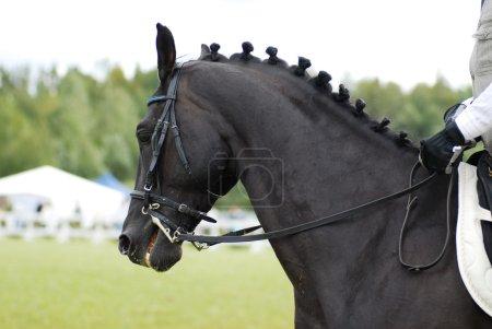 Hermoso caballo negro con jinete
