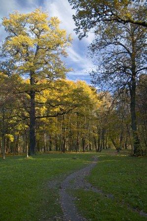 Foto de Hermoso colorido Parque en octubre - Imagen libre de derechos