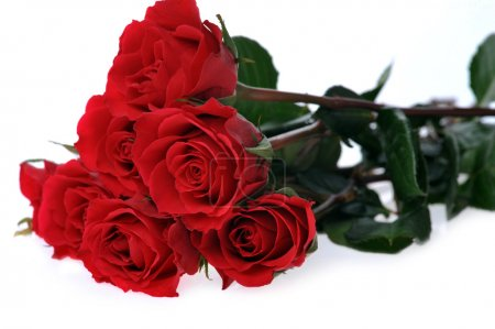 Photo for Beautiful red roses isolated on white - Royalty Free Image